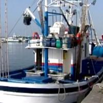 Los socialistas majoreros exigen subir la cuota del atún rojo para Canarias al 10%