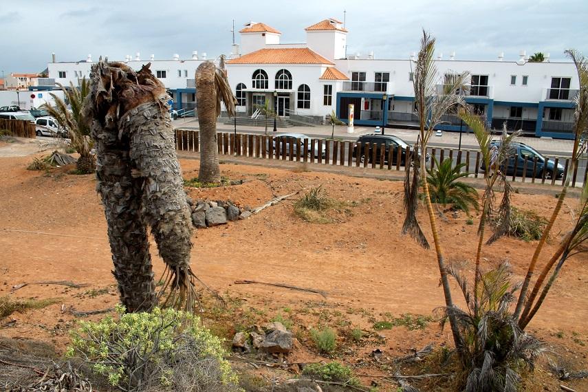 El PSOE reclama al Ayuntamiento de La Oliva recuperar el abandonado Parque Botánico de Corralejo